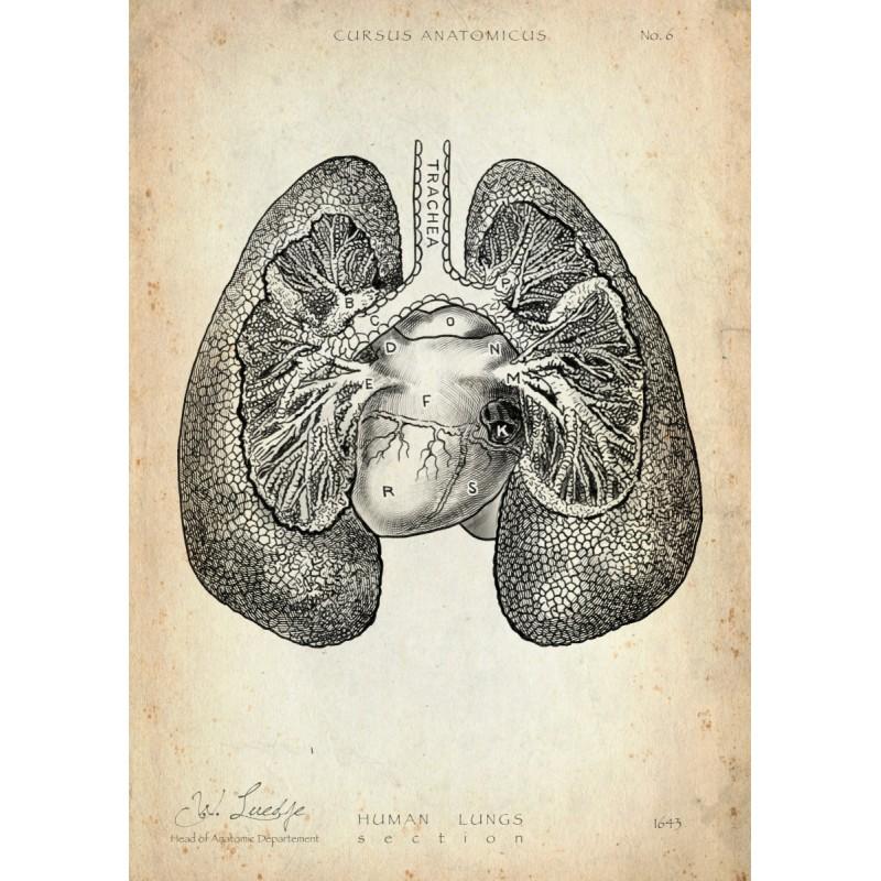 Lungenfl/ügel Arzt Chirurg Schmetterling DIN A3 Lunge DIN A4 Geschenk Anatomy Medizin Deko Kunstdruck