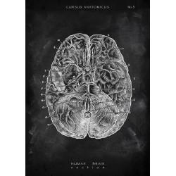 Brain - Overview (Chalkboard Edition)