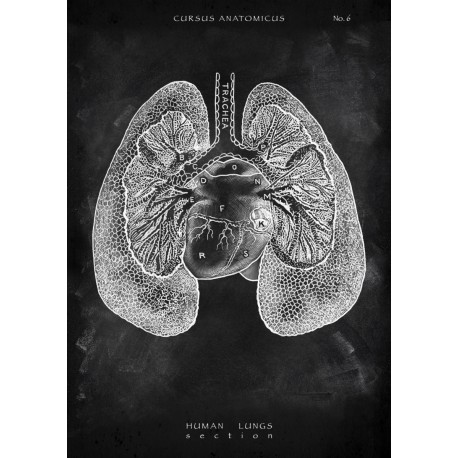 Lungs - Section (Chalkboard Edition)