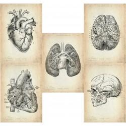 5er Set Bestseller anatomische Motive