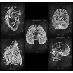 5er Set Bestseller anatomische Motive (Chalkboard Edition)