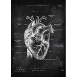 Heart - Overview (Chalkboard Edition)
