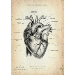 Heart - Overview