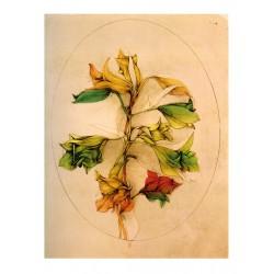 A floral fantasy, Bruno Bruni