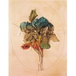Viola tricolor, Bruno Bruni